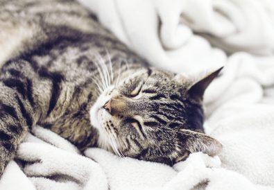 Polyplasmic sleep