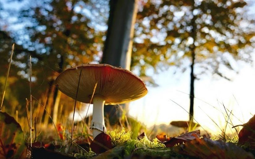 small quantities of these Teelixir Superfood Mushrooms